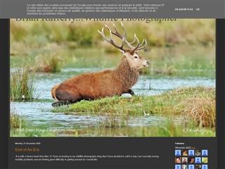 Brian Rafferty ... Wildlife Photographer
