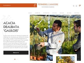 Pépinières Cavatore : spécialité mimosa